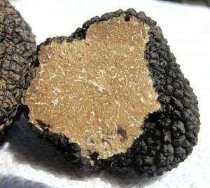 truffle-203031_1280