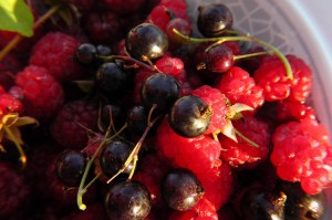 fruits-of-the-forest-490573_1280