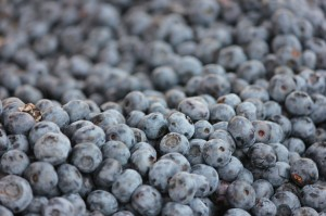 blueberry-410655_1280
