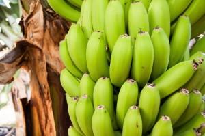 bananas-571542_1280