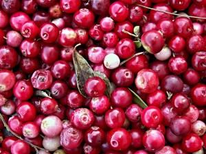 cranberries-112155_1280