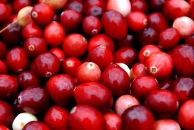 Harvest Begins At Colorful Cranberry Bogs
