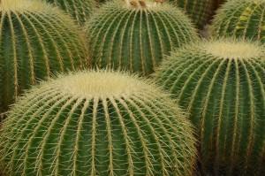 cactus-257253_1280