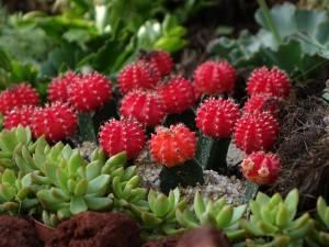 cactus-419471_1280