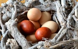 egg-495256_1280