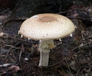 mushroom-552772_1280