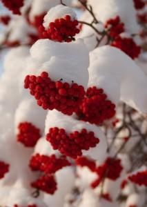 winter-526569_1280