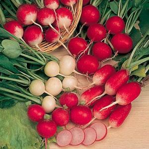 unbranded-radish-mixed-seeds