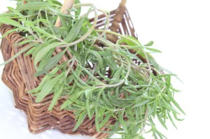 fresh green Savory in a basket on white background