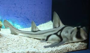 2009_shark_in_Shanghai
