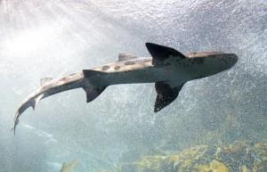 shark-553666_1280