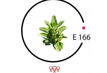e 166