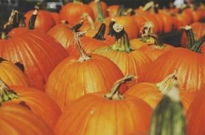 pumpkins-691666_640