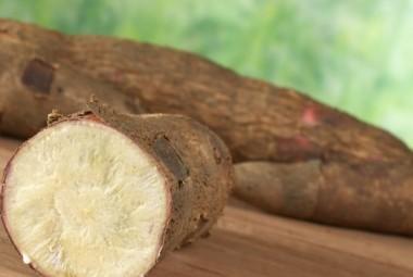 cassava-manioka1