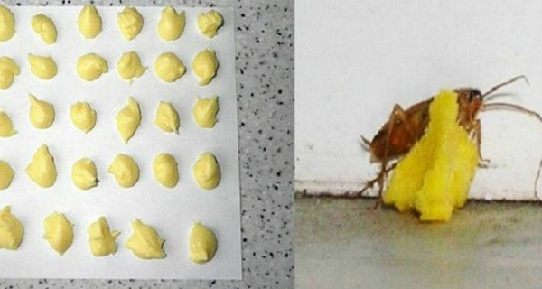 AMAZING-Get-Rid-Of-Cockroaches-Forever-With-This-Trick
