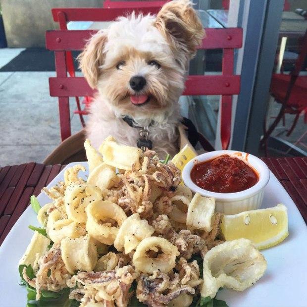 rescue-dog-food-instagram-popeyethefoodie-20-5786029fe6c34__700