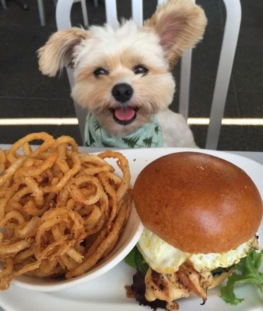 rescue-dog-food-instagram-popeyethefoodie-9-57860267a5284__700