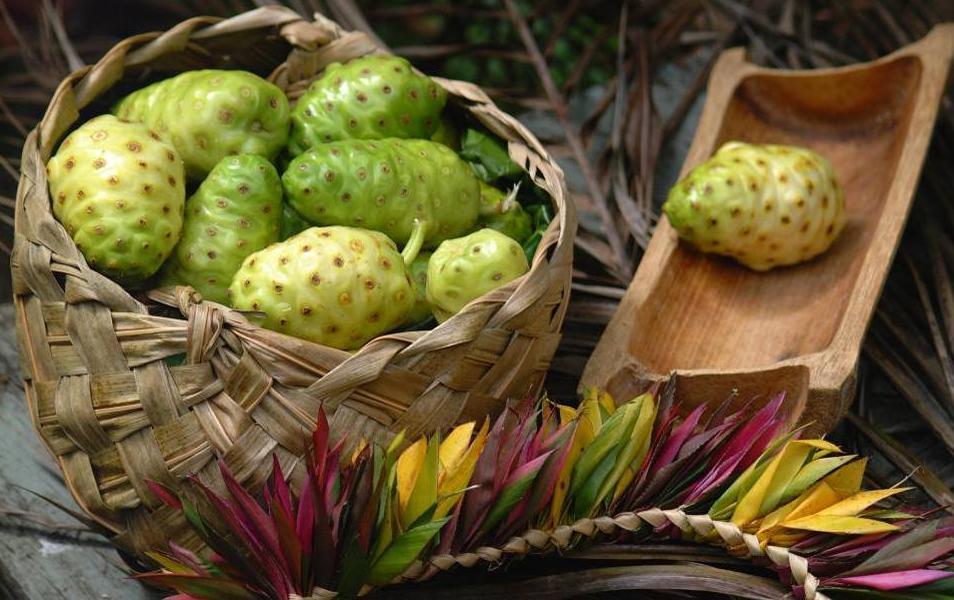 Плоды-Нони-лечебное-растение