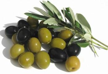 olivki-masliny